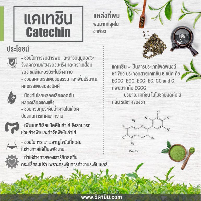 catechin-antioxident
